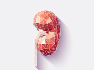 Kidney faceted