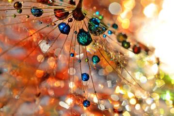 Obraz colorful life - fototapety do salonu