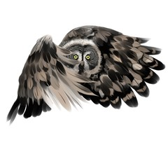 owl flies, drawing white background, black and white