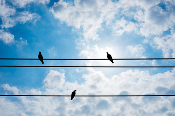 Three pigeon on electric wire and summer sky