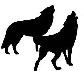 two howling wolves