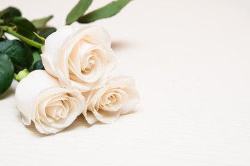 White roses on a light wooden background. Women' s day, Valentin
