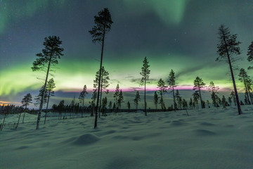 Wall Mural - Aurora borealis (Northern Lights) in Finland, lapland forest