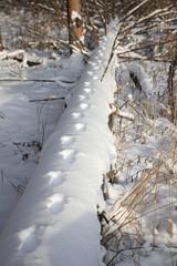 animal footprints on a fallen tree, in snow