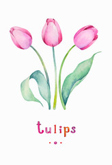 Vector Watercolor Spring Tulips