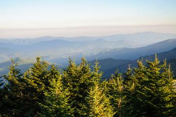 Mount Mitchell State Park