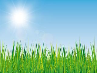 Frühling Hintergrund mit Gras und Sonne