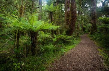 Walking trail in New Zealand sub-tropical rainforest
