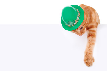 St Patrick's Day cat. Saint Patricks Day pet holding sign