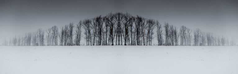 Winter Tree Symmetry Long Horizontal Wall mural