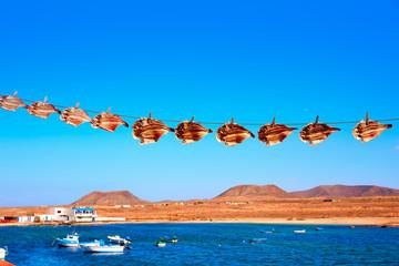Majanicho dried Parrot fish Vieja in Fuerteventura