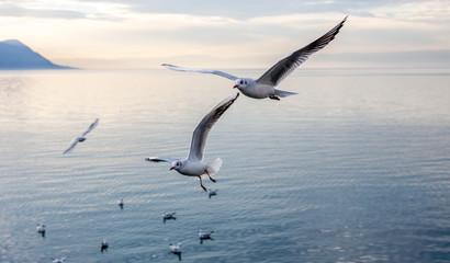 gulls over Geneva lake Wall mural