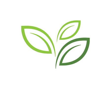 Leaf vector logo design, eco-friendly concept