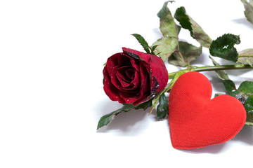 Heart shaped and red roses on white background.