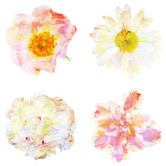 Watercolor painting with abstract flowers rose hips, chamomile,