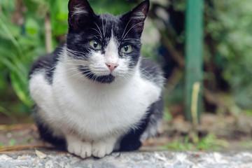 кот черный и белый