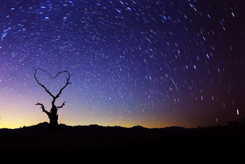 Heart shape of dead tree with star trails movement at night sky.