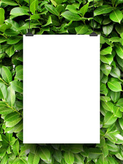 Close-up of hanged paper sheet with clips on green leaves background
