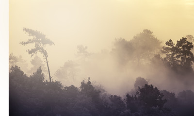 Soft focus nature, forest with mist in morning, vintage filtered