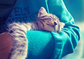 sweet sleeping in arm of owner /Kitty