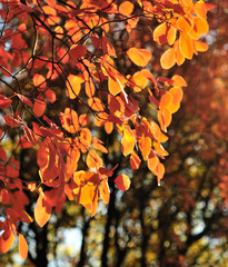 tree branches and fall foliage