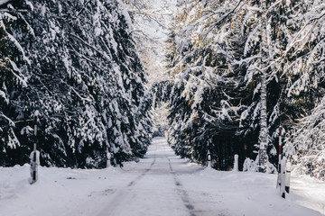 Beautiful winter snowy road in the woods