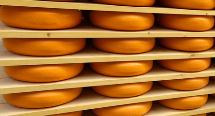 many forms of orange cheese in the dairy