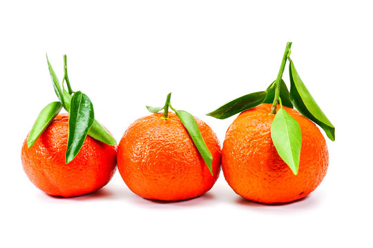 Three very freshly picked corsican clementine with leaves isolated on white background