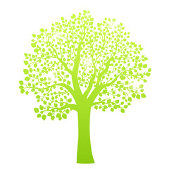 Green tree with leaves