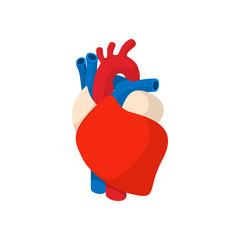 Human heart cartoon icon