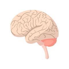 Human brain cartoon icon