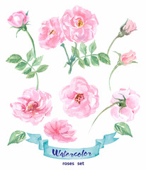 Watercolor wild rose. Hand drawn vector illustration. Spring or summer design for invitation, wedding or greeting cards.