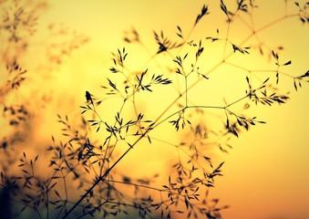 Gräser im Flammenmeer