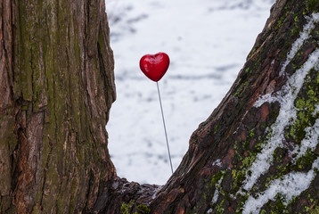 Red lollipop heart shaped on the snowy trunk of the tree in winter park