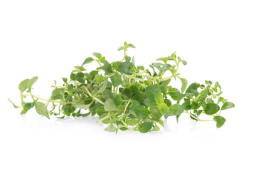 thyme plant on white background