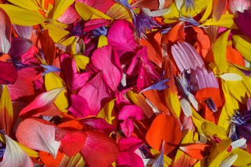 Background of colorful flower petals. Sunlight and sadow