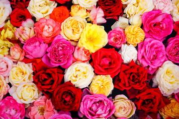 敷き詰めた薔薇
