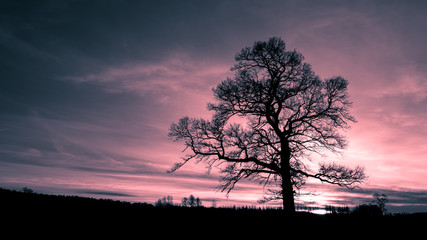 Naworth, Cumbria UK - December 2015: Dramatic silhouette of a leafless tree during the winter in the Cumbrian countryside.