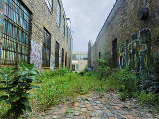 Urban alley with overgrown weeds and graffiti - landscape photo