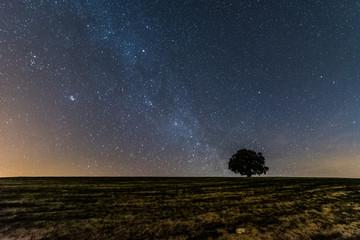 Estrellas en el desierto
