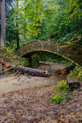Stone Bridge in Forest
