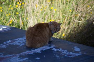 Grumpy cat hiding in the shadows