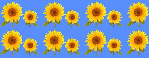 pattern flower sunflower