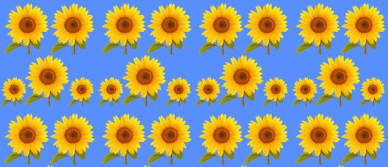 pattern flower sunflower