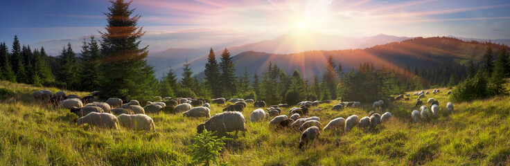 Foto op Aluminium Schapen Shepherds and sheep Carpathians