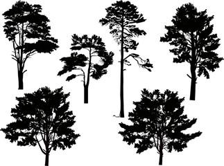 six large black pine trees set isolated on white