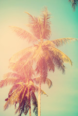 Palm trees in sun light on blue sky. background for travel design