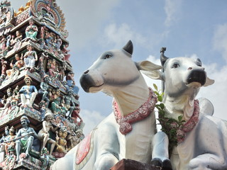 Statues of holy cows in Singapore with decorated ornamental religious tower