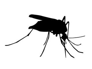 Zika Mücke Silhouette