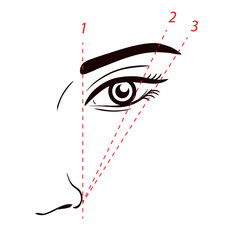 How to paint the eyebrows. How to shape the eyebrow on face. Vector trendy makeup scheme.
